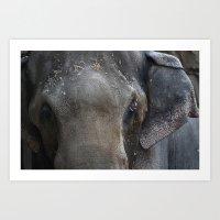 Zoo Elephant Art Print