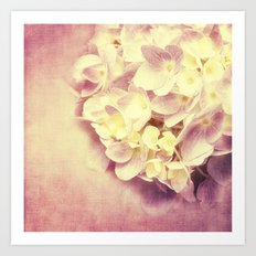 HYDRANGEA IN VANILLA AND PINK Art Print