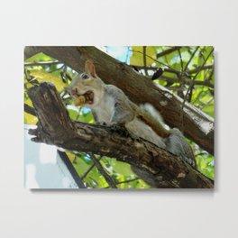 Mouthful squirrel Metal Print