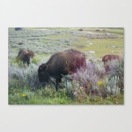 Child of Color Canvas Print
