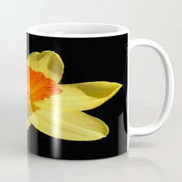 Spring Daffodil Isolated On Black Coffee Mug