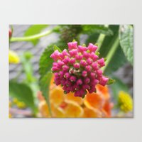 square Canvas Prints featuring square by Dottie