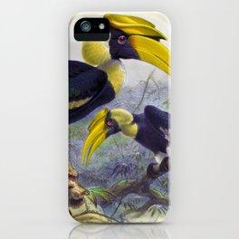 Hornbill, Hornbill Bird, Dichoceros bicornis Hornbill Antique Print by Daniel Elliot iPhone Case