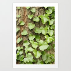 Ivy Tree Art Print