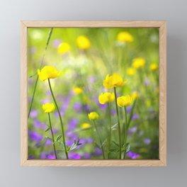 Wonderful Yellow Globeflowers #decor #society6 Framed Mini Art Print