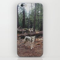 california iPhone & iPod Skins featuring Injured Coyote by Kevin Russ