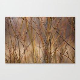 Canadian Prairies 10 Canvas Print