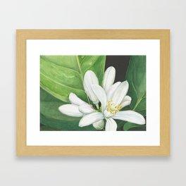 Watercolor Orange Blossom Framed Art Print