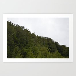 Pine trees atop mountain. Art Print