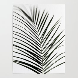 Palm Leaves 7 Poster