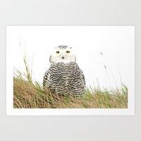 hedwig Art Prints featuring Hedwig by Ruurd Jelle van der Leij Highkeyart
