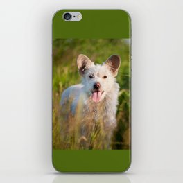 Single white stray tyke dog at the meadow iPhone Skin