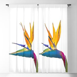 Bird of Paradise Flower (colour pen and ink) Blackout Curtain