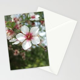 Blossom Flower Stationery Cards