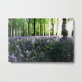 Bluebell Woods at Sunrise Metal Print