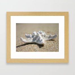 Beach Shell Framed Art Print