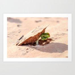 Sprouting cotton Art Print