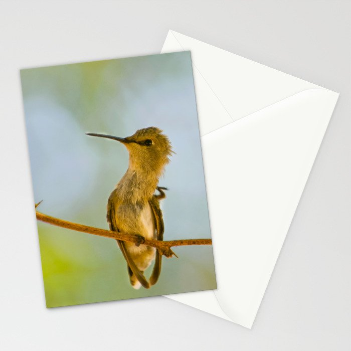 Itchy Bird Stationery Cards