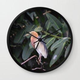National Aviary - Pittsburgh - Javan Pond Heron Wall Clock