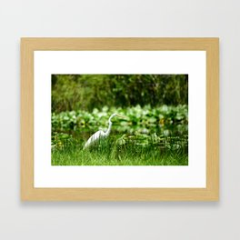 Great Egret in a Green Field Framed Art Print
