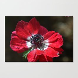 Rouge Canvas Print