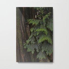 Bark and Branch Metal Print
