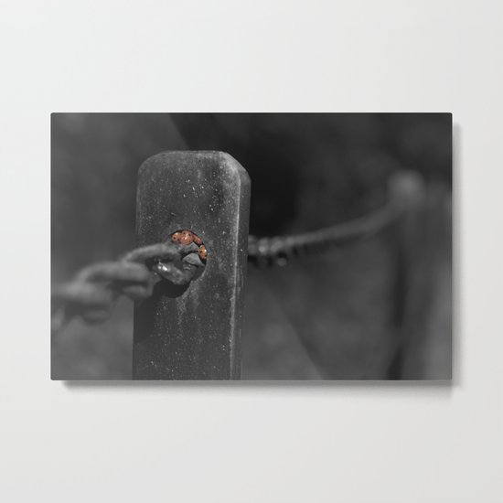 shelter from the storm... Metal Print