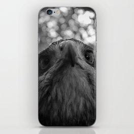 Black-Chested buzzard eagle portrait iPhone Skin