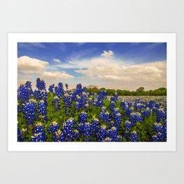 Bluebonnet Texas Art Print