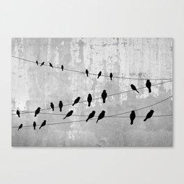 Concrete and birds Canvas Print