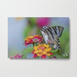 Southern swallowtail or zebra butterfly Metal Print