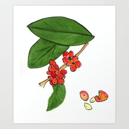 Coffee Berries Art Print