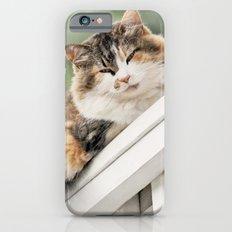 Cat on a Rail iPhone 6s Slim Case