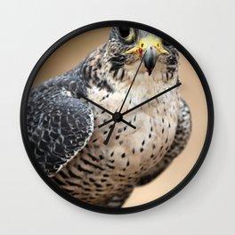 Saker Hawk Wall Clock