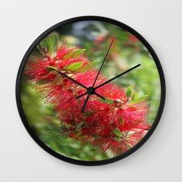 Calliandra Haematocephala Red Powderpuff  Wall Clock