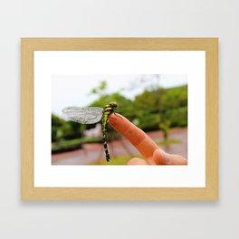 Clinging Dragon Framed Art Print
