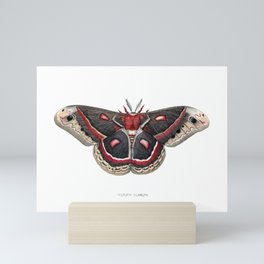 Cecropia Moth Mini Art Print