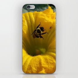 Pollen collecting in a pumpkin blossom iPhone Skin