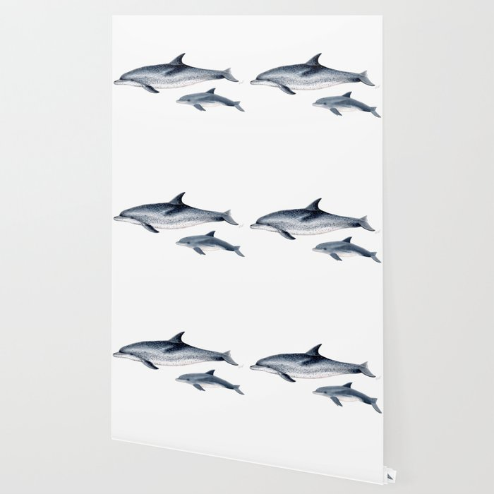 Atlantic spotted dolphin Wallpaper