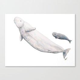 Beluga and baby beluga whale Canvas Print