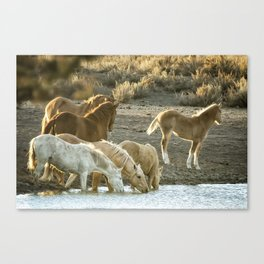 Quenching Their Thirst Canvas Print