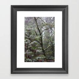 Shinrin-yoku Framed Art Print