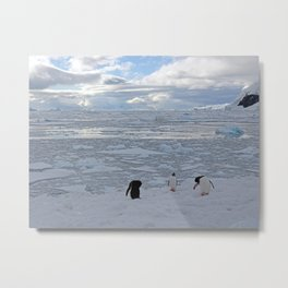 Gentoo Penguins Preening in the Snow Metal Print