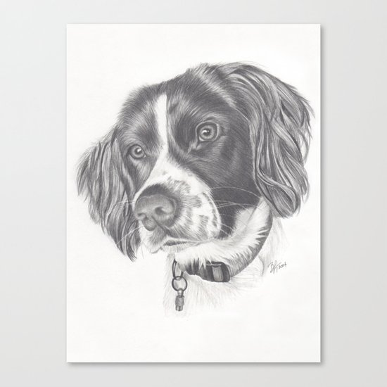 Springer Canvas Print