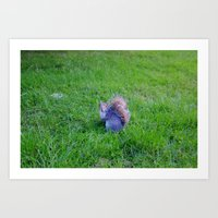 Squirrel 1 Art Print
