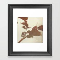 Raindrops and Rose Leaves Framed Art Print