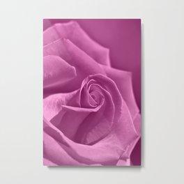 Rose 219 Metal Print