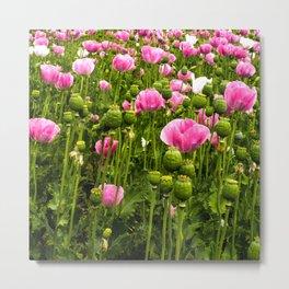 Poppy fields in Holland Metal Print