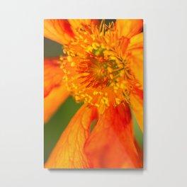 Orange Macro Flower Metal Print