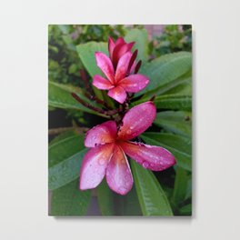 Plumeria Flower in the Rain Metal Print